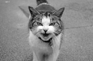 cat-13476279941Ls